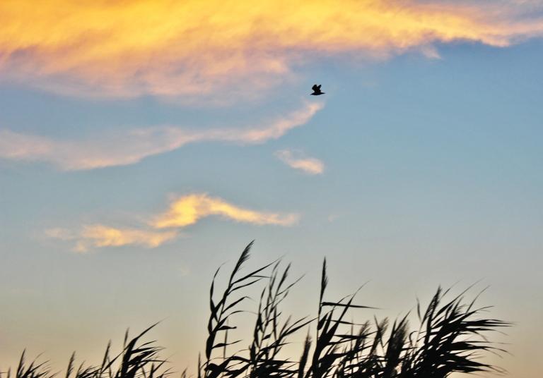 Volo al tramonto