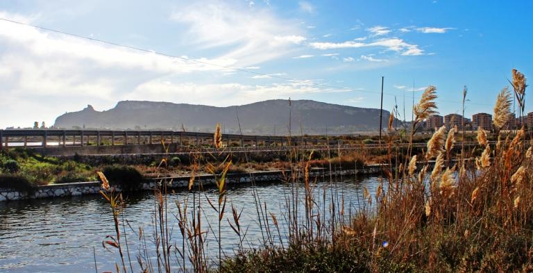 Parco del Molentargius 1